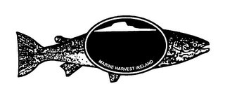 mark for MARINE HARVEST IRELAND, trademark #78505797